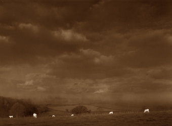 Six vaches, Bourgogne, France - 2002